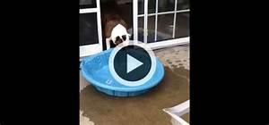 Piscine Plastique Dur : gus le bulldog qui veut vraiment une piscine int rieure vid o du jour vid os wamiz ~ Preciouscoupons.com Idées de Décoration