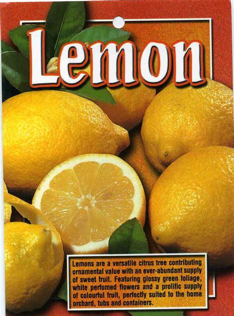 lemon citrus limon