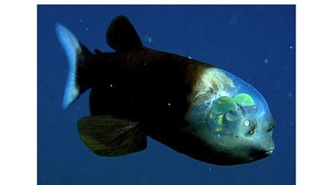 8 Weird Sea Creatures | Mental Floss