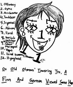 Trigeminal Nerve Chart Cranial Nerves Mnemonics Clean Easy To Remember