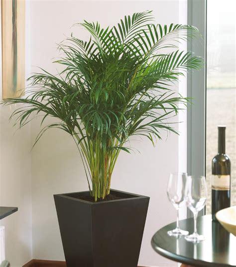 Pflanzen Im Zimmer by Bergerhoff Gr 252 N Erleben Zimmerpflanzen F 252 R Ein Gutes Raumklima
