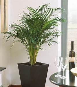 Zimmerpflanzen Alte Sorten : gr n erleben zimmerpflanzen f r ein gutes raumklima ~ Michelbontemps.com Haus und Dekorationen