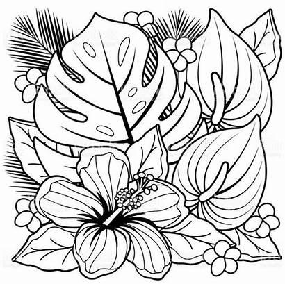 Flores Desenhos Colorir Moldes Imprimir Casa