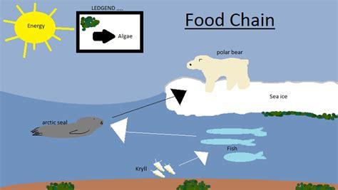 endangered species polar bear science 10 project