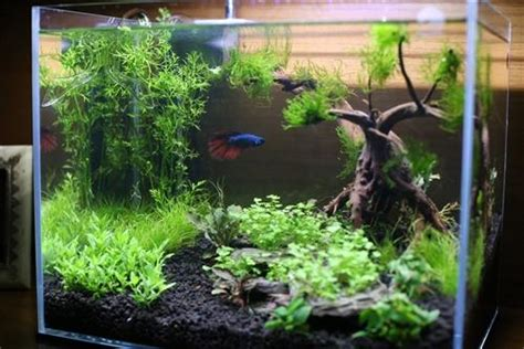 Aquascape Tank For Sale by Custom Aquarium Aquascape Design Aquariumplants