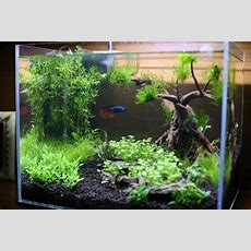 Custom Aquarium Aquascape Design Aquariumplantscom