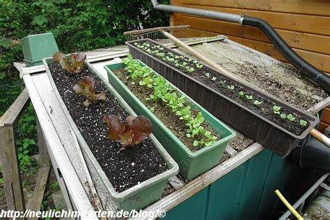 Gemüse Im Balkonkasten by Gemuese In Blumenkaesten Was Bei Uns Zur Zeit So Alles In