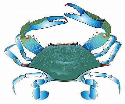 Crab Clipart Clip Marlin Cliparting Cliparts Cartoon