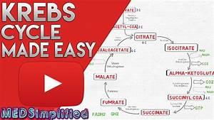 Krebs Cycle Made Simple