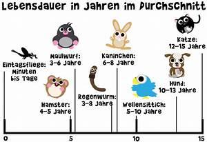 Wie Alt Werden Berner Sennenhunde : wie alt werden tiere ~ Eleganceandgraceweddings.com Haus und Dekorationen