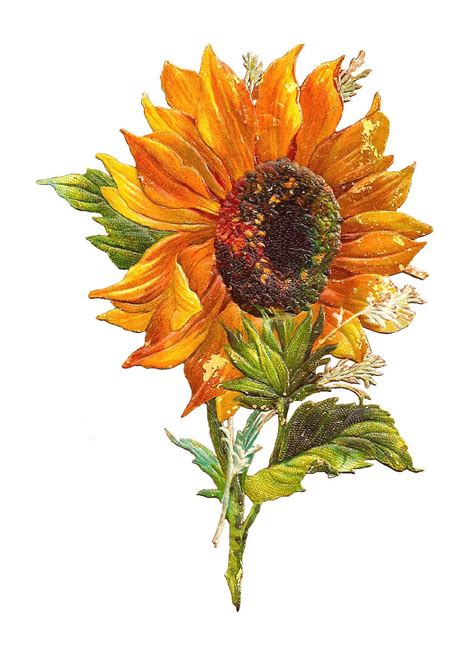free clipart graphics antique images free flower graphic sunflower clip of