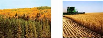 Vegetation Ecozone Plains Boreal Activities Farming Soil