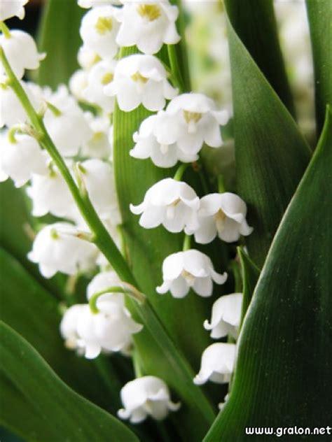 carte muguet 1er mai th 232 me fleurs