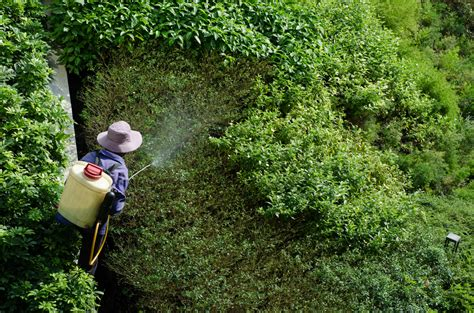 Roundup The Weed Killer That Kills People