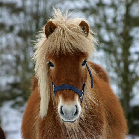 cold weather equimed horse