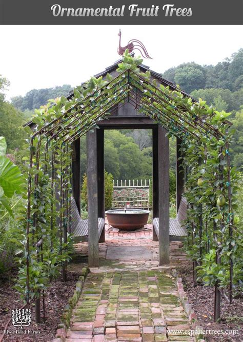 espalier fruit trees create a home orchard with a small