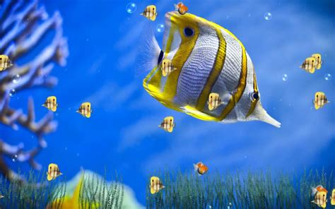 Free Animated Wallpaper For - gif images marine aquarium animated