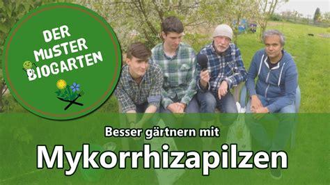 Pilze Im Garten Ernten by Wie Mykorrhiza Pilze Im Garten Ihre Ernte Verbessern