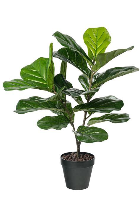 Fiddle Leaf Fig Artificial Plant Online | Shop EziBuy Home