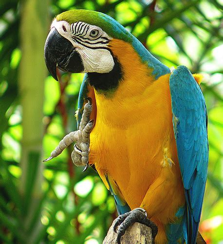 10 most simplest ideas of diy toys for macaws diy craft