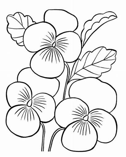 Gambar Cantik Bunga Mewarnai Kupu Diwarnai Coloring