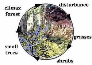 Jessica U0026 39 S Wonderful World Of Plants  Process Of Ecological
