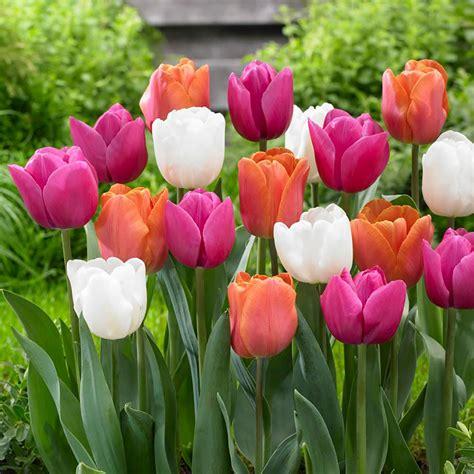 tulip garden stunning places destination