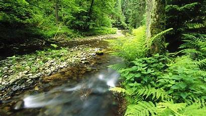 Wallpapers Nature Park Germany Schweiz National Catalogue