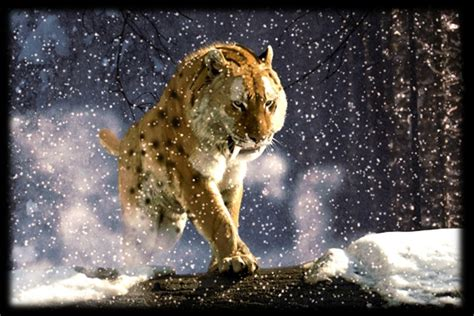 Prehistoric Animal Sabertooth Tiger