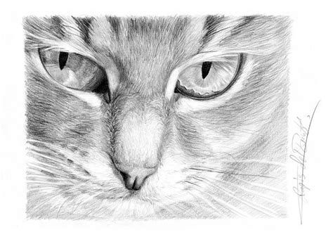 images  realistic cat face drawings cookie ideas