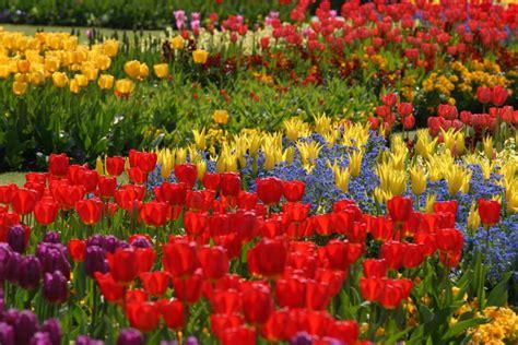 tulip arrangements edging design ideas designs for garden flower beds