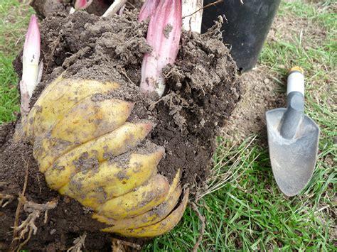 bulb the diggit gardener