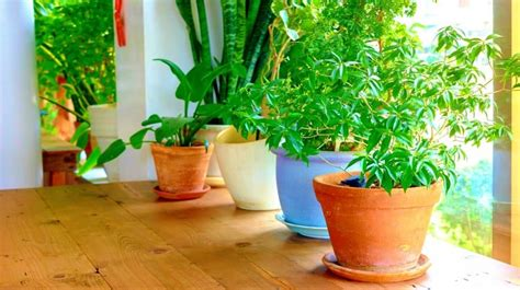 indoor gardening supplies 13 indoor gardening supplies to invest in project grace