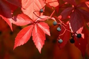 Die Farben Des Herbstes : die farben des herbstes garten ~ Lizthompson.info Haus und Dekorationen