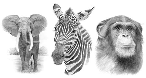uk page signed pencil drawing prints  sale