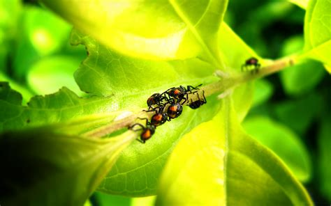 insects hd wallpaper high resolution wallpaper