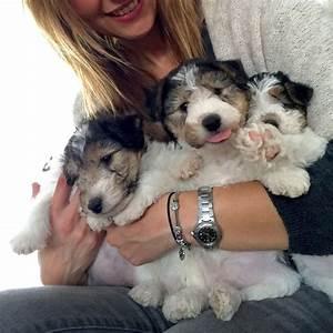 Mis bebes de cuatro patas! | Puig d'Agulles Fox Terrier