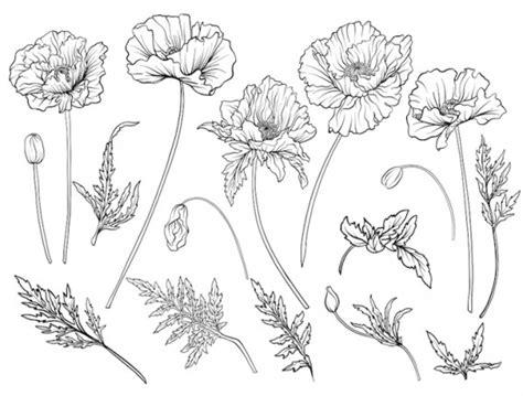 disegni di fiori a matita disegni a matita semplici fiori
