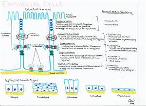 Cell Biology Study Guides  With Images