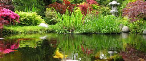 plante de bassin exterieur amis verts