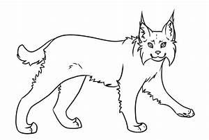 Lynxbobcat Lineart By Rhenae On Deviantart