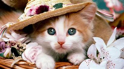 Cat Adorable Cats Down Funny Laying Favorite