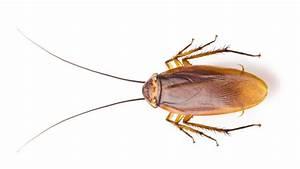 Kakerlaken ähnliche Insekten : hilfe gegen haushaltssch dlinge vitagate ~ Articles-book.com Haus und Dekorationen