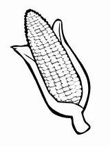 Dibujo Corn Colorear Elote Coloring Imprimir кукуруза раскраска Dibujos Projects Husk Template Thanksgiving Harvest Bubble Wrap Compartir Painting sketch template
