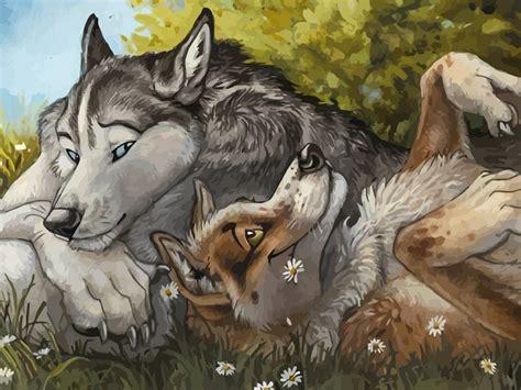 Furry Wolf Wallpaper Wallpapersafari