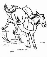 Mule Coloring Farm Animal Animals Horse Pack Bucking Printable Activity Honkingdonkey Cliparts Saddle Donkey Ranch Drawing Clipart Sheet Adult Ridge sketch template