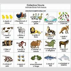 10 Best Collective Nouns Images On Pinterest  Random Stuff, Random Things And Collective Nouns