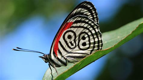 hd nature images  macro photo  butterfly hd