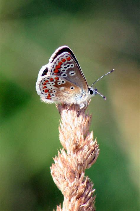 รูปภาพ : ธรรมชาติ, หญ้า, สาขา, ดอกไม้, สัตว์ป่า, แมลง, แมโ ...