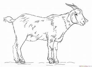 Drawn goat - Pencil and in color drawn goat